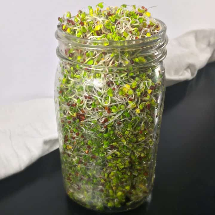 How to make broccoli sprouts square image